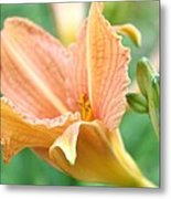 Light Peach Metal Print by Cathie Tyler