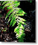 Light Play On Fern Metal Print