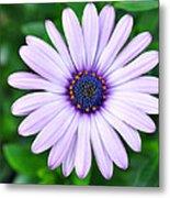 Light Purple Daisy  Metal Print