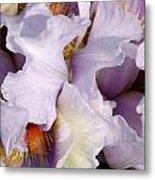Light Purple Irises 2 Metal Print