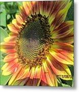 Light-shade Sunflower Metal Print