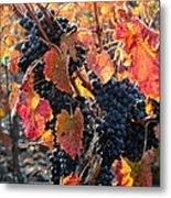 Light Through Fall Vineyard Metal Print