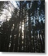Light Through The Trees Metal Print