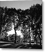 Light Through The Trees Metal Print