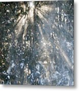 Light Throught The Trees Metal Print
