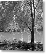 Light Tree Metal Print