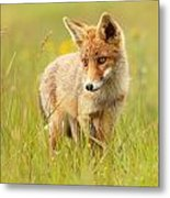 Lil' Hunter - Red Fox Cub Metal Print