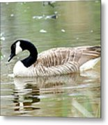 Lila Goose Queen Of The Pond 2 Metal Print