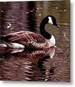 Lila Queen Of The Pond Metal Print