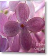 Lilac Bloom Metal Print