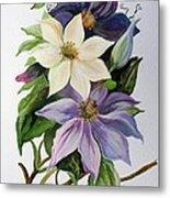 Lilac Clematis Metal Print