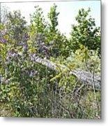 Lilac Fence IIi Metal Print