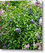 Lilac Heaven Metal Print