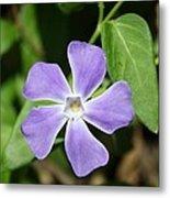 Lilac Periwinkle Metal Print