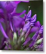 Lilac Petals And Purple Buds Metal Print