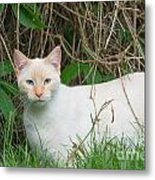 Lilac Point Siamese Cat Metal Print