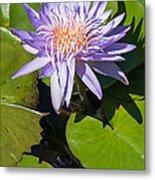 Lilac Water Lily Metal Print