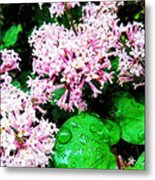 Lilacs After The Rain Metal Print