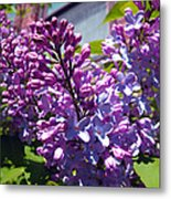 Lilacs Metal Print