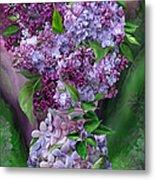 Lilacs In Lilac Vase Metal Print