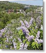Lilacs On The Hill Metal Print