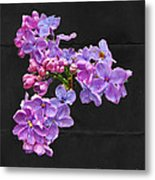 Lilacs - Perfumed Dreams Metal Print