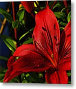 Lilies By The Water Metal Print by Randy Hall