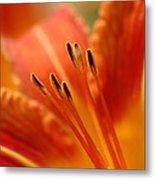 Lilies Heart Metal Print by Edward Loesch