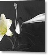 Lilies In Black And White Metal Print