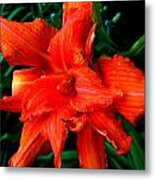 Lillie 2 Metal Print by Mark Malitz