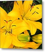 Lillies In Yellow Metal Print