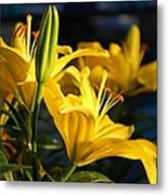 Lillies Of Gold Metal Print