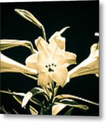 Lilly And Light Metal Print