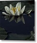 Lilly Of The Morning Metal Print