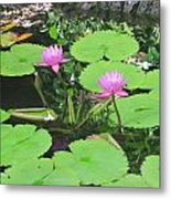 Lilly Pad In Hawaii Metal Print