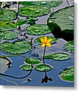 Lilly Pad Pond Metal Print