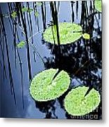 Lilly Pad Pond Metal Print