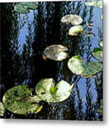 Lilly Pad Reflection Metal Print