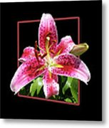 Lilly Ready To Serve Metal Print
