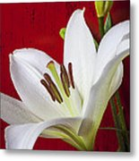 Lily Against Red Wall Metal Print by Garry Gay