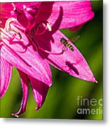 Lily And Fly Metal Print