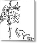 Lily And Poppy Flower Line Drawing Metal Print