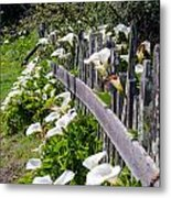 Lily Fence Metal Print