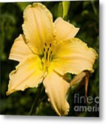 Lily For A Day Metal Print
