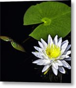 Lily From The Black Lagoon Metal Print