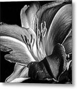 Lily In Black In White Metal Print