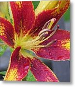 Lily In My Patio Metal Print