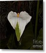 Lily In The Dark Metal Print