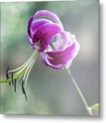 Lily In The Mist Metal Print by Jill Balsam