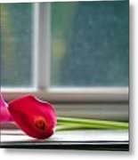 Lily In Window Metal Print by Tammy Smith